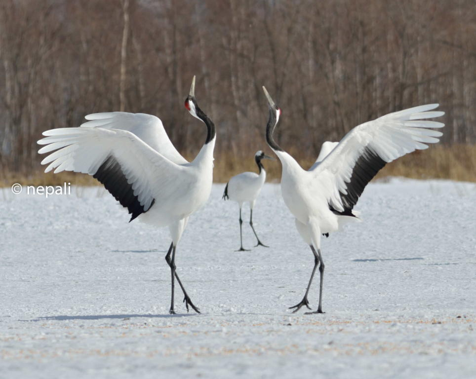 ���� ��2 ��� 2014 ����� fascinated by cranes